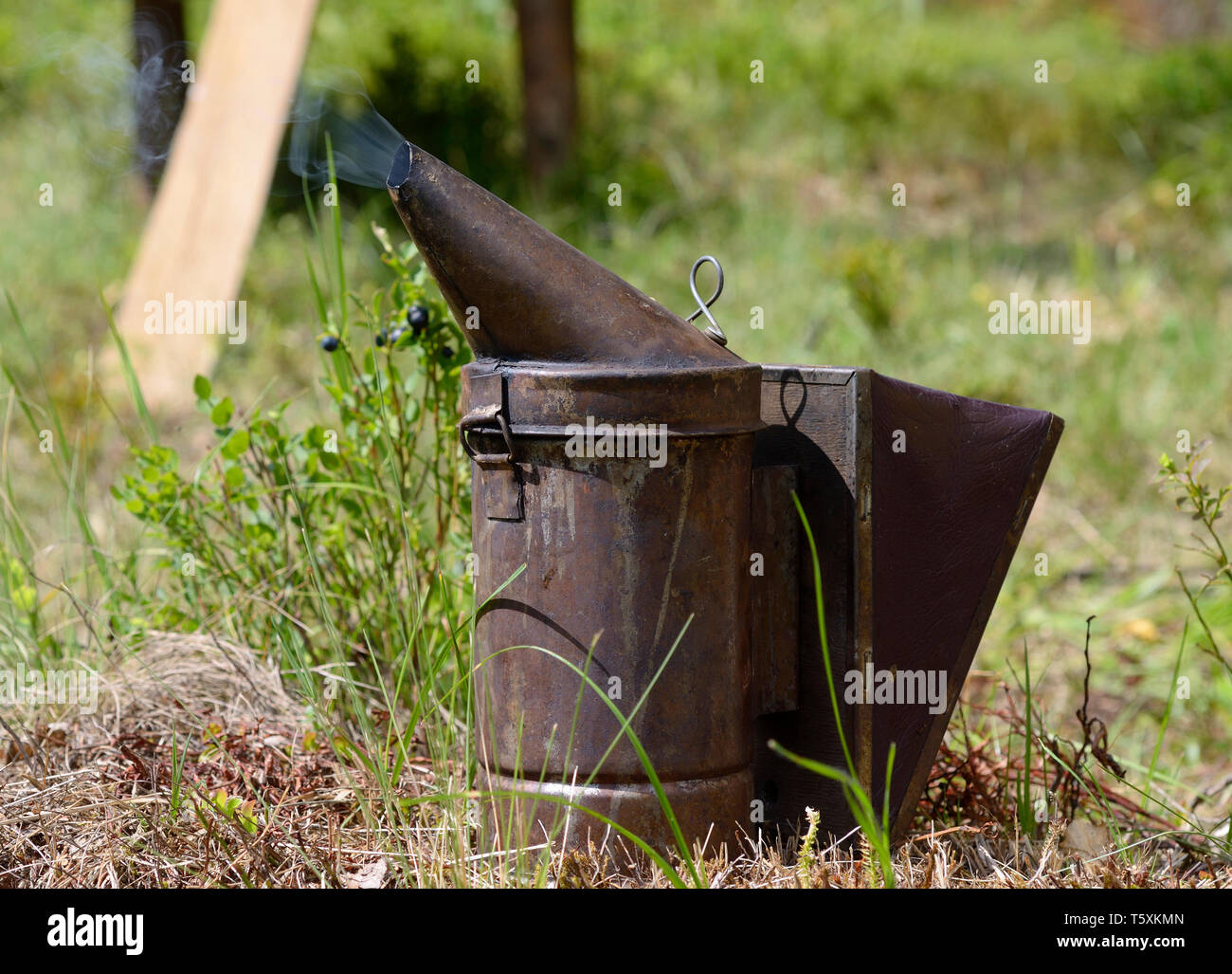 Old bee smoker. The bee smoker is used to calm bees before frame removal. - Stock Image