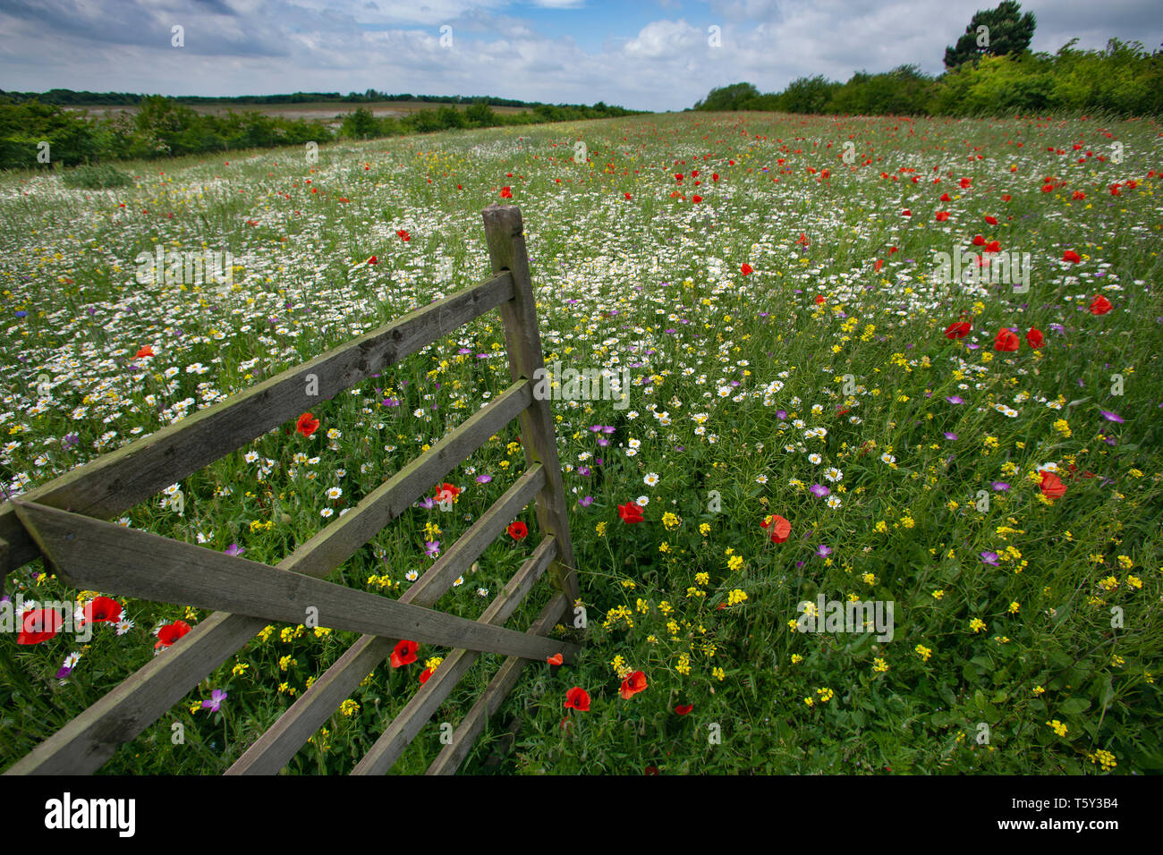 Old gate leading to wild flower meadow Chilterns Buckinghamshire UK June Stock Photo