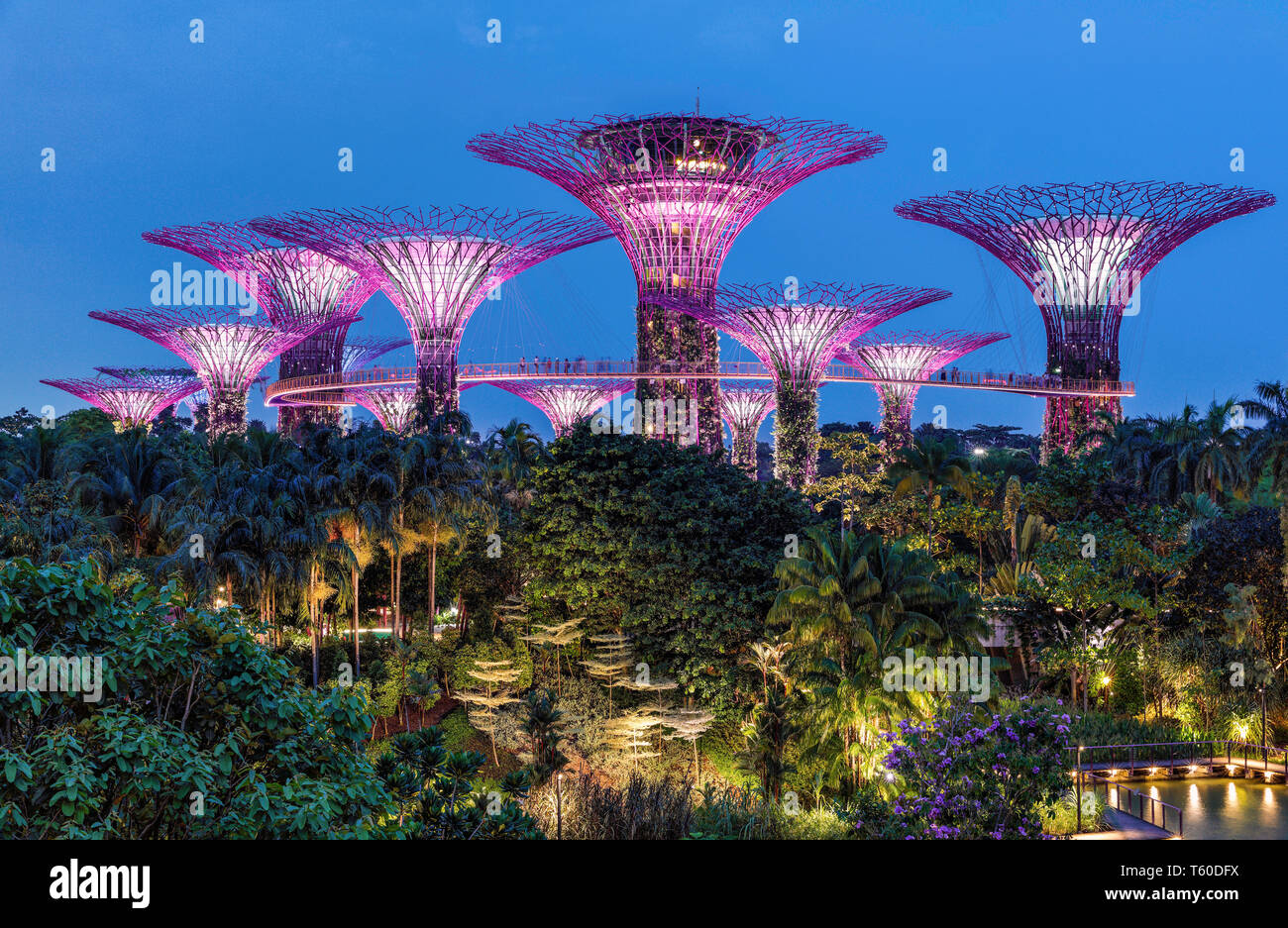 The Super Trees at Gardens By The Bay, Singapore. Stock Photo