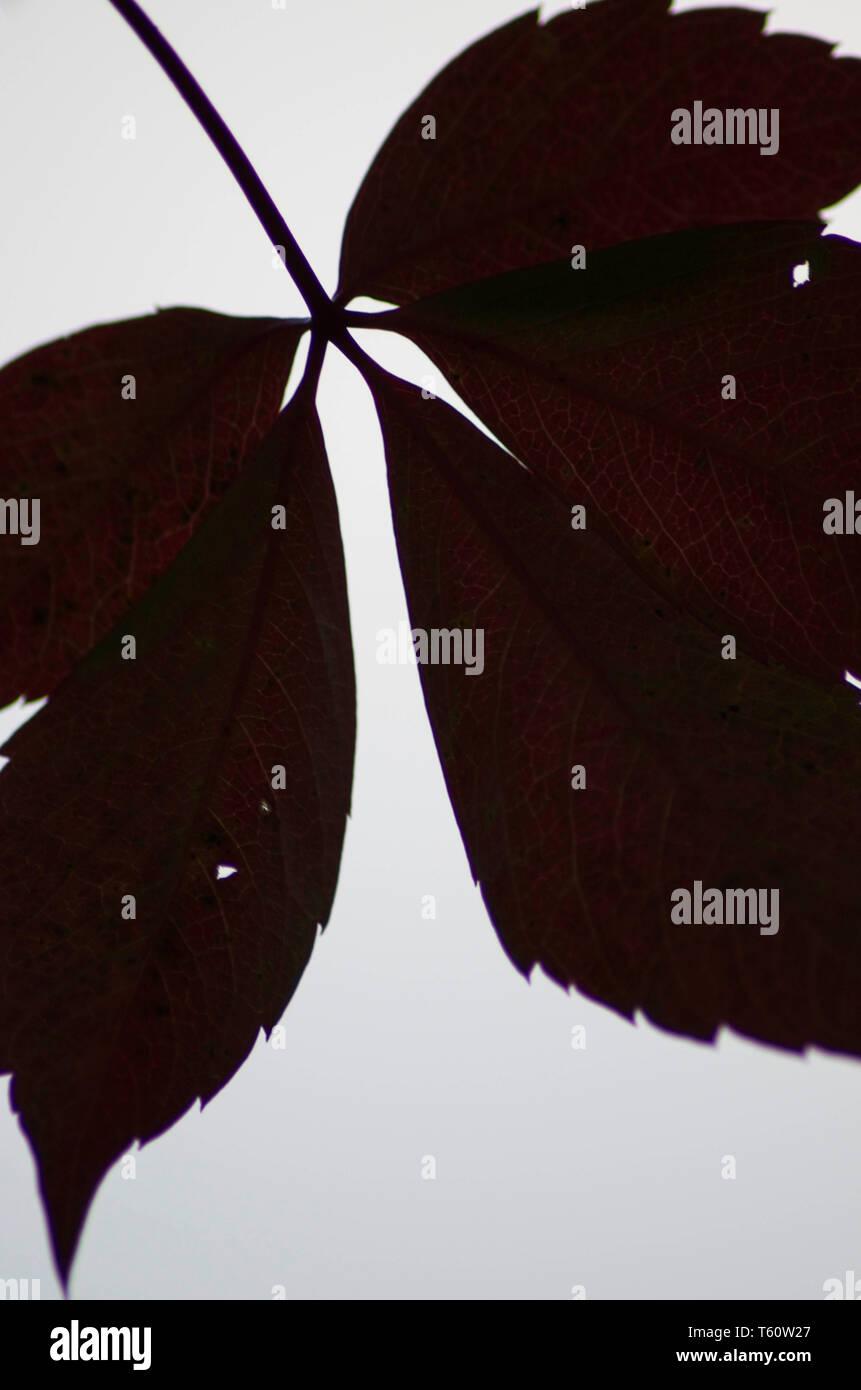 Macro image of brown leaf - Stock Image