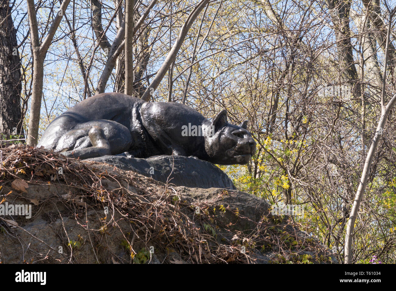 """""""Still Hunt"""" Cougar Sculpture, East Drive, """"Cat Hill"""", Central Park, NYC Stock Photo"""