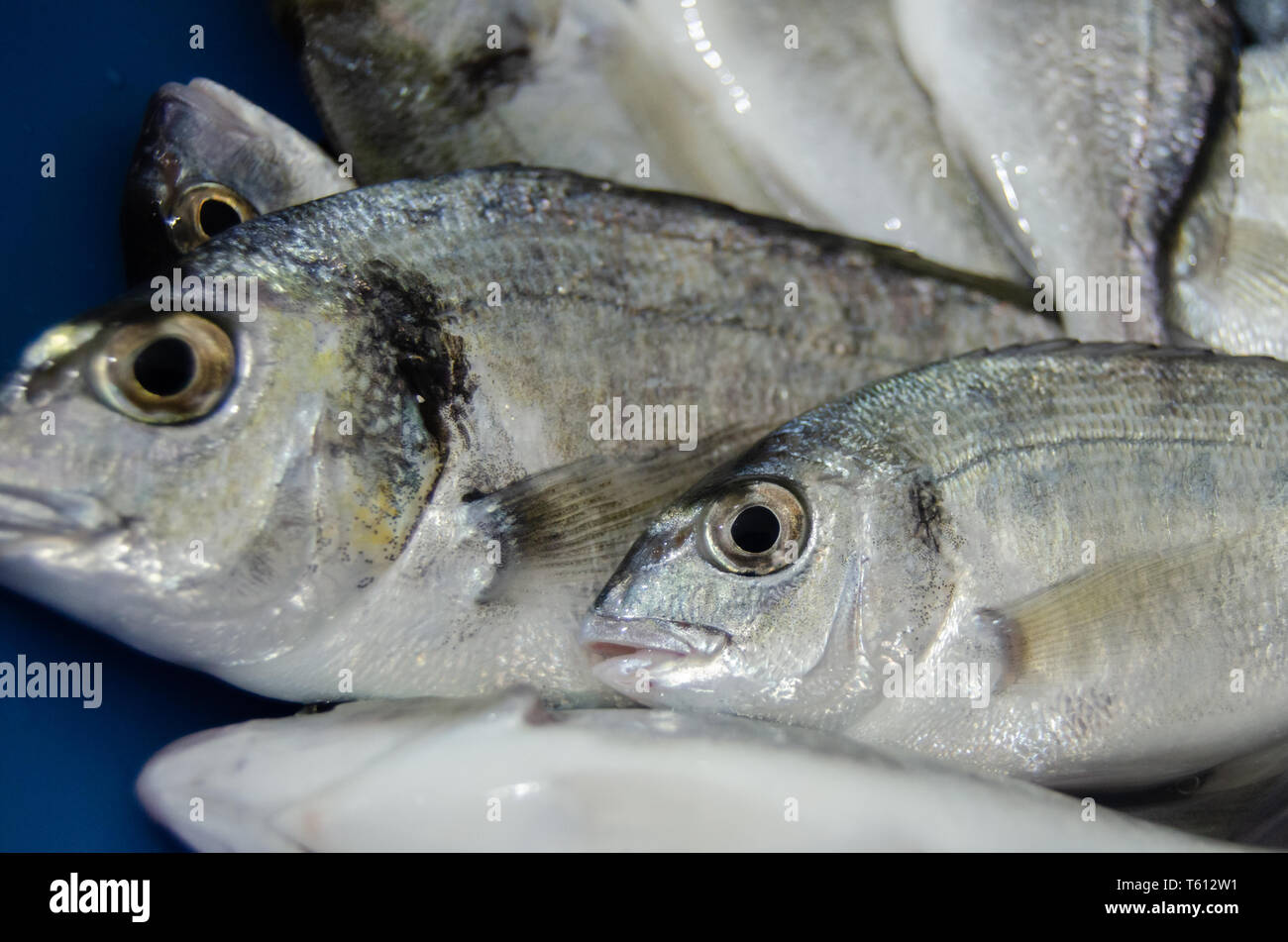 close up shoot of small freash fish just taken from the sea - Stock Image