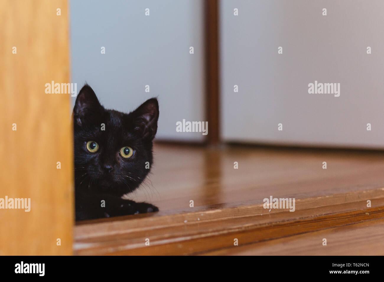 Schwarze Katze Kater / black cat male Stock Photo
