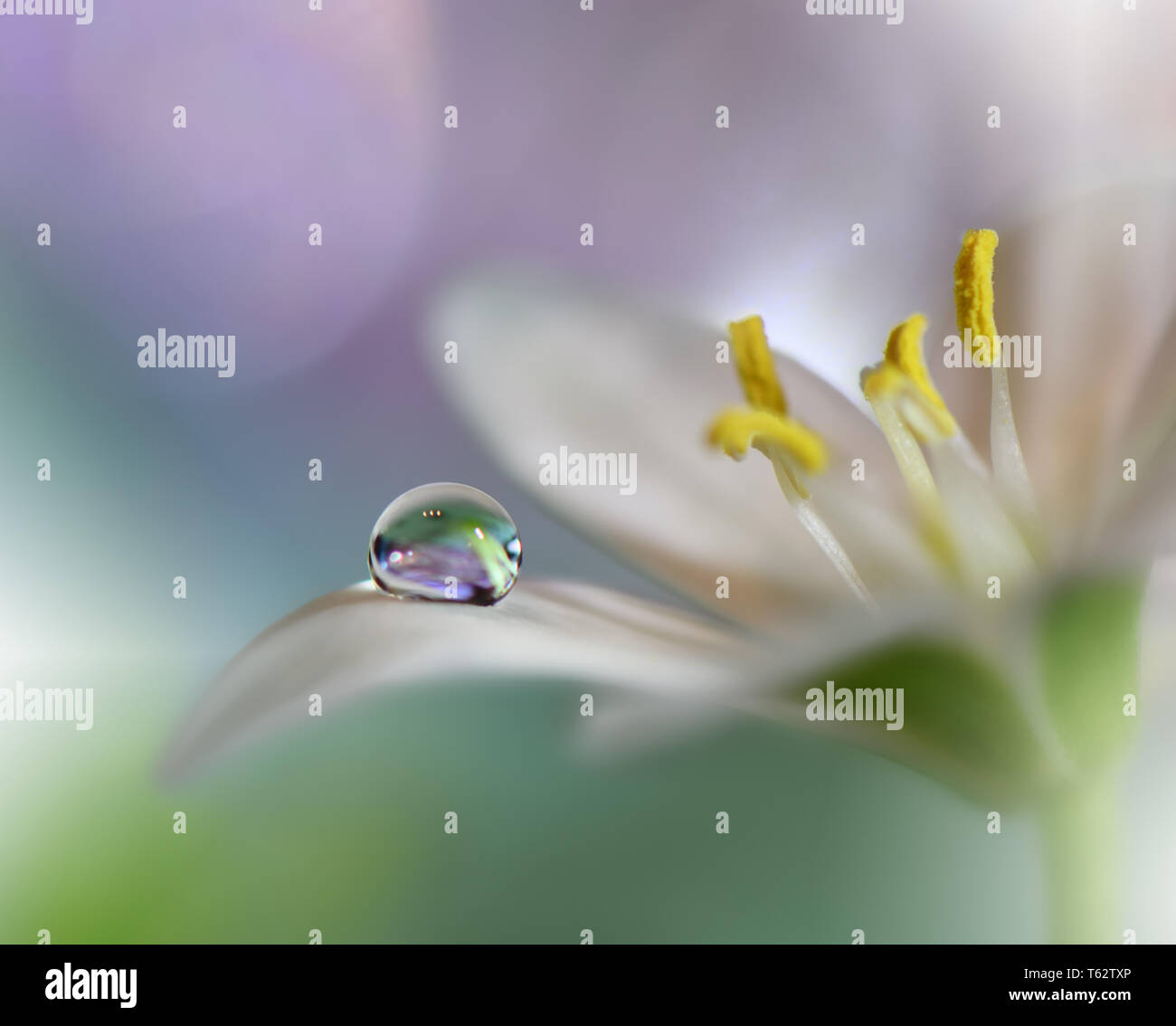 Beautiful Green Nature Background Colorful Artistic Wallpaper Natural Abstract Macro Photography Creative Floral Art Design Love Romance Romantic Pure Stock Photo Alamy