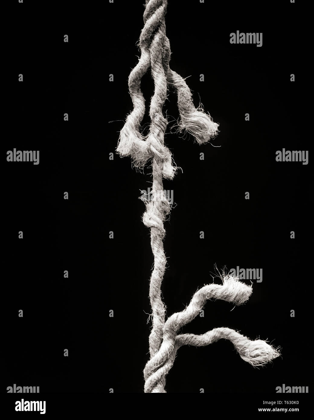 1930s HEMP ROPE UNWINDING READY TO BREAK STRETCHED TO BREAKING POINT HANGING BY A THREAD - s4393 HAR001 HARS REPRESENTATION - Stock Image