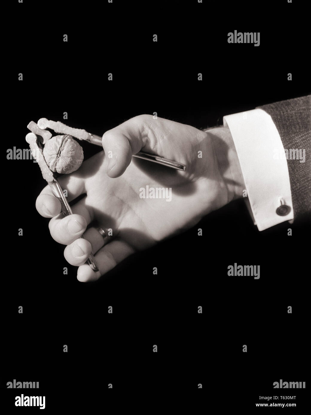 1930s MALE HANDS CRACKING WALNUT WITH METAL HAND-HELD CRACKER CRACKING TOOL - s8638 HAR001 HARS HAND-HELD HANDS ONLY HAR001 OLD FASHIONED REPRESENTATION - Stock Image