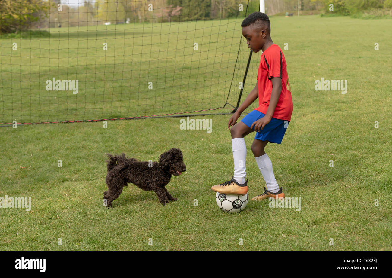 Hampshire, England, UK. April 2019. A young football player defending the goal during a traning session with his pet dog in a public park. - Stock Image