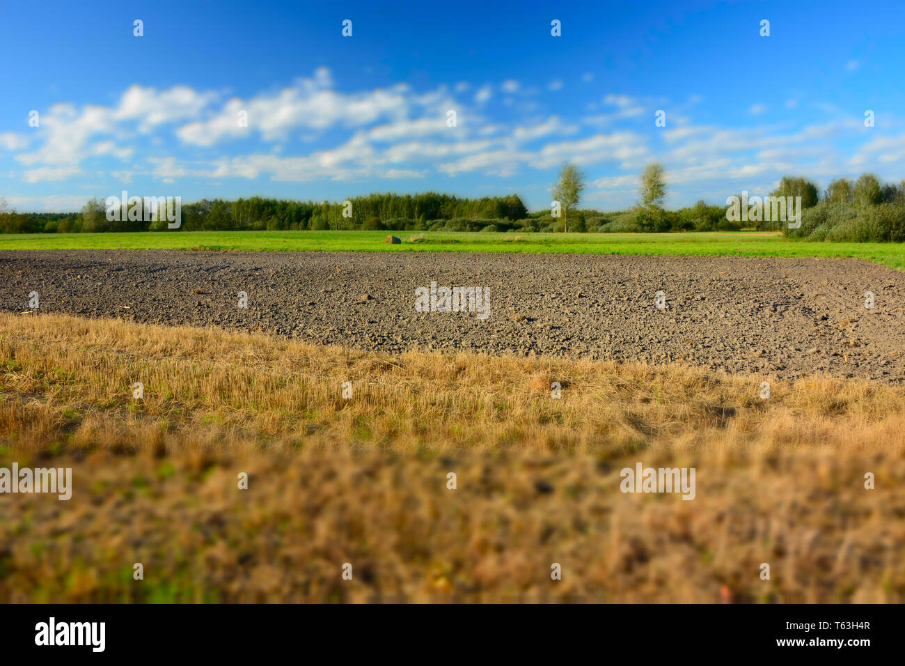 A large stubble field, plowed field, forest and white clouds on blue sky - blur and contrasting colors - Stock Image