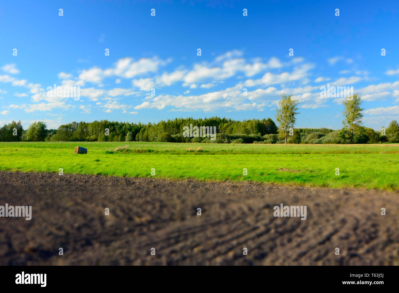Plowed field, forest and white clouds on blue sky - blur and contrasting colors - Stock Image