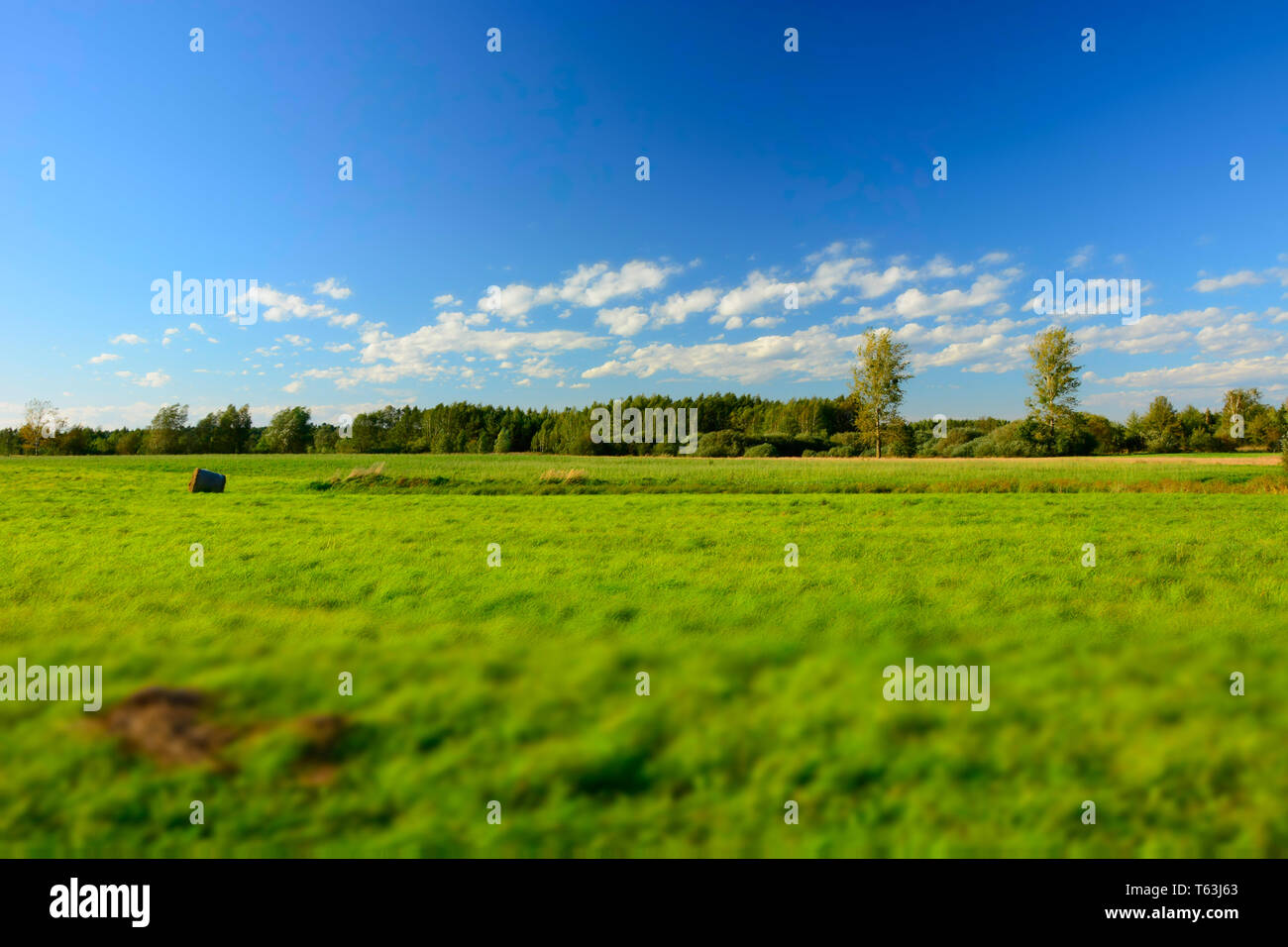 Green big meadow, forest and white clouds on blue sky - blur and contrasting colors - Stock Image
