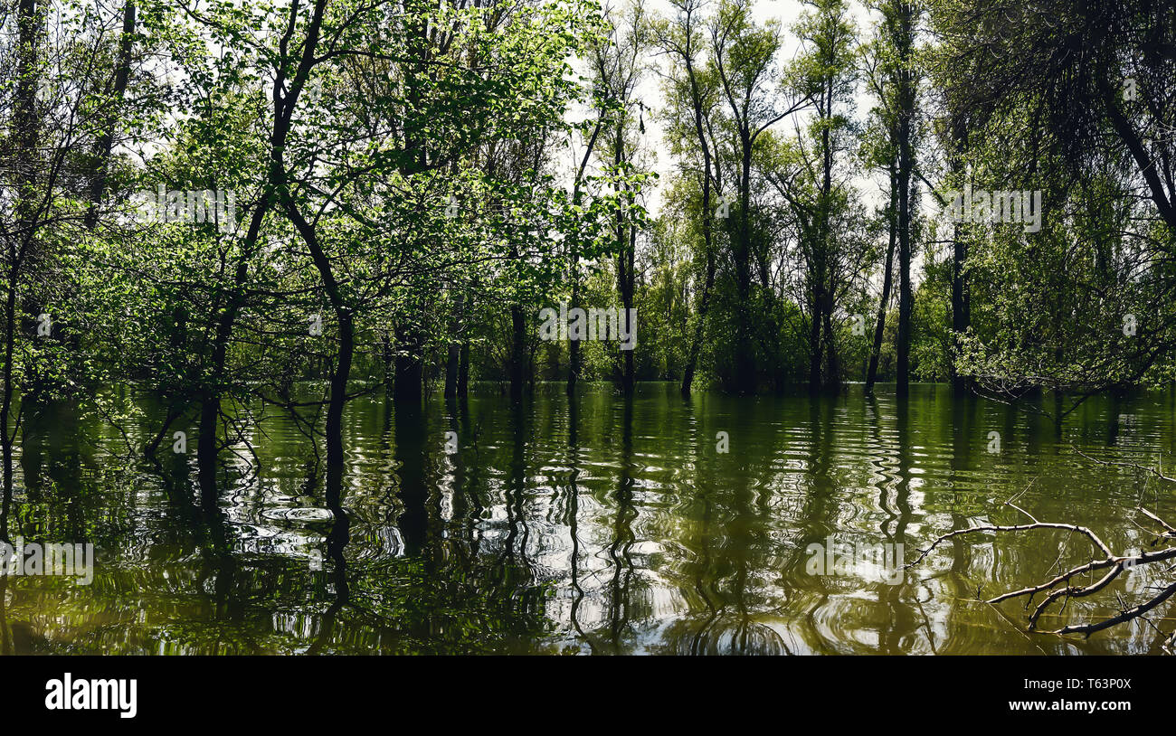 spring flood, morning on the lake and trees standing in the water, illuminated by sunlight - Stock Image