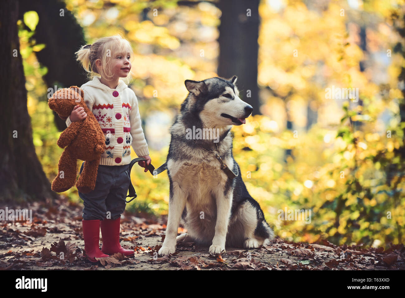 Dog and little girl in autumn forest. Dog husky with child on fresh air outdoor - Stock Image