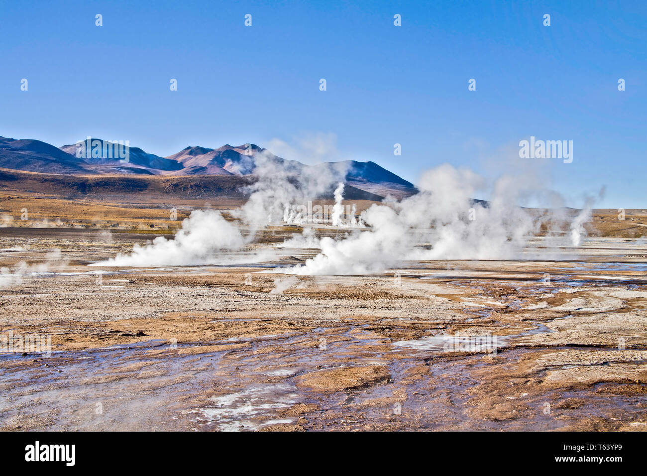 You have to get up at day break to appreciate the steam from the hydrothermal vents of the El Tatio geyser field in the Chilean high Atacama desert. - Stock Image