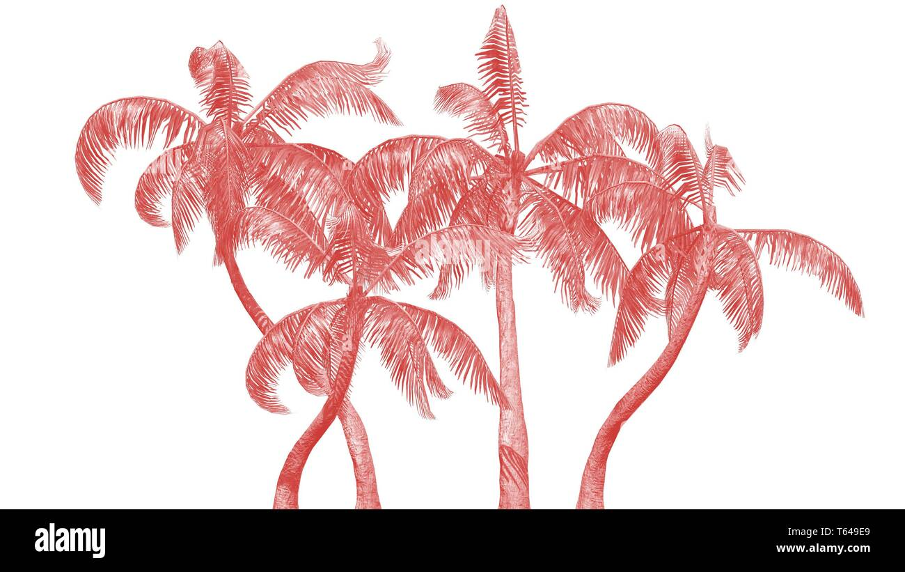 Living Coral - Colour of the year - Queen palms on white background - Stock Image