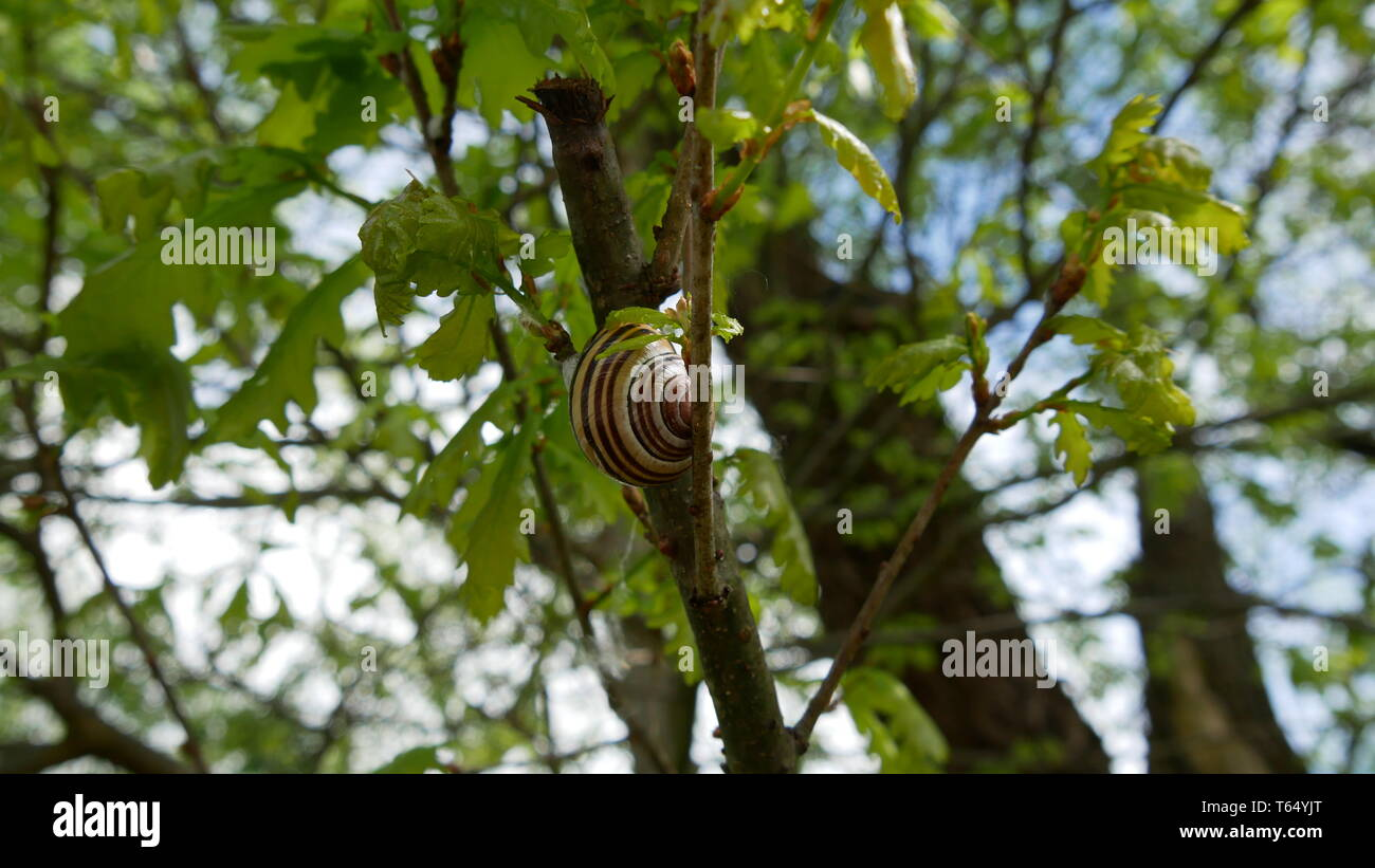 Snail on the way up - Stock Image