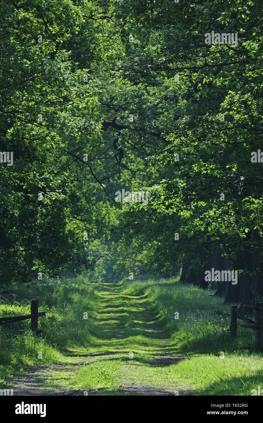 Primeval Forest Sababurg, Hesse, Germany Stock Photo