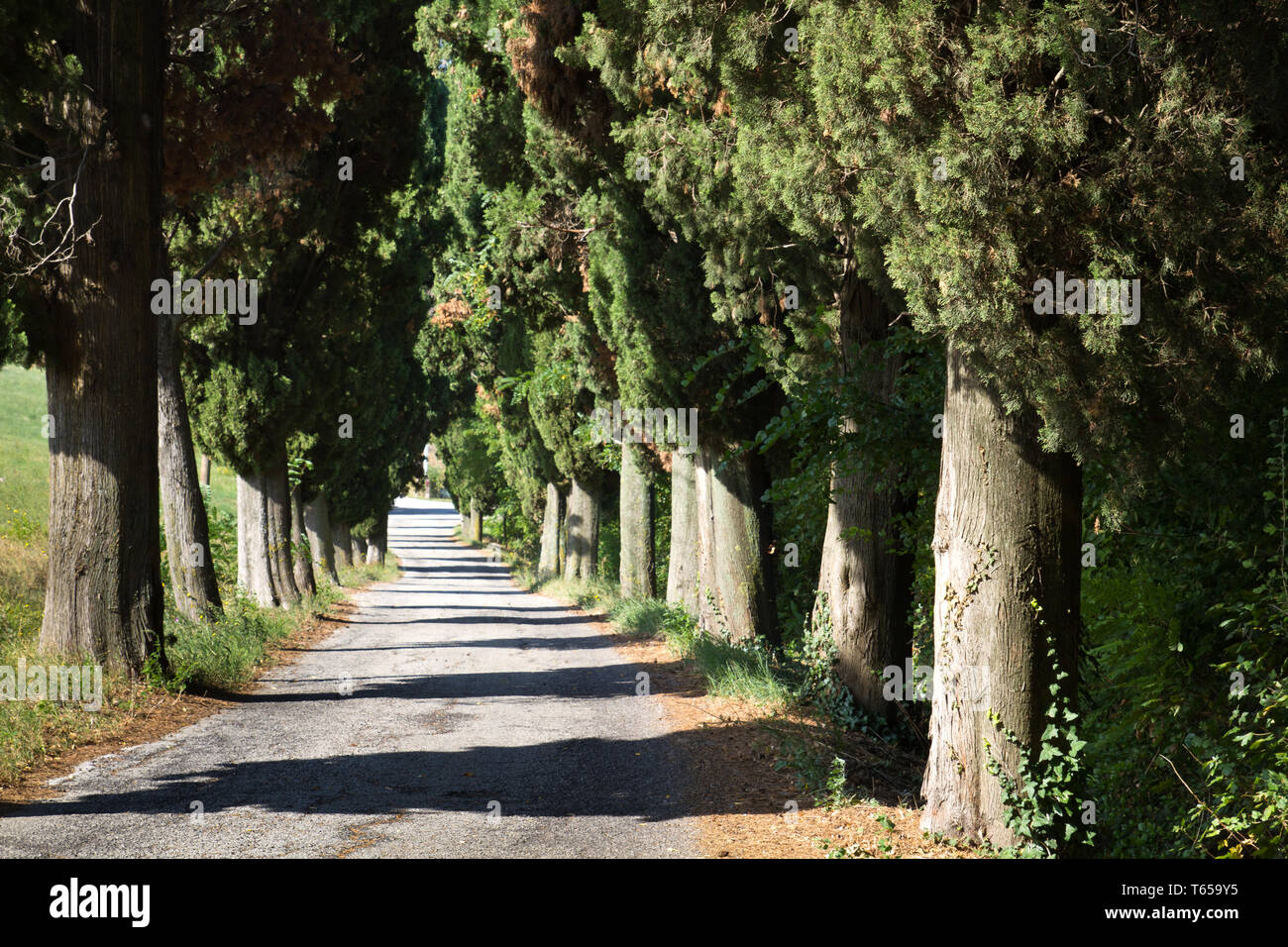 Beautiful Landscape, Marche or the Marches, a Region in Italy - Stock Image