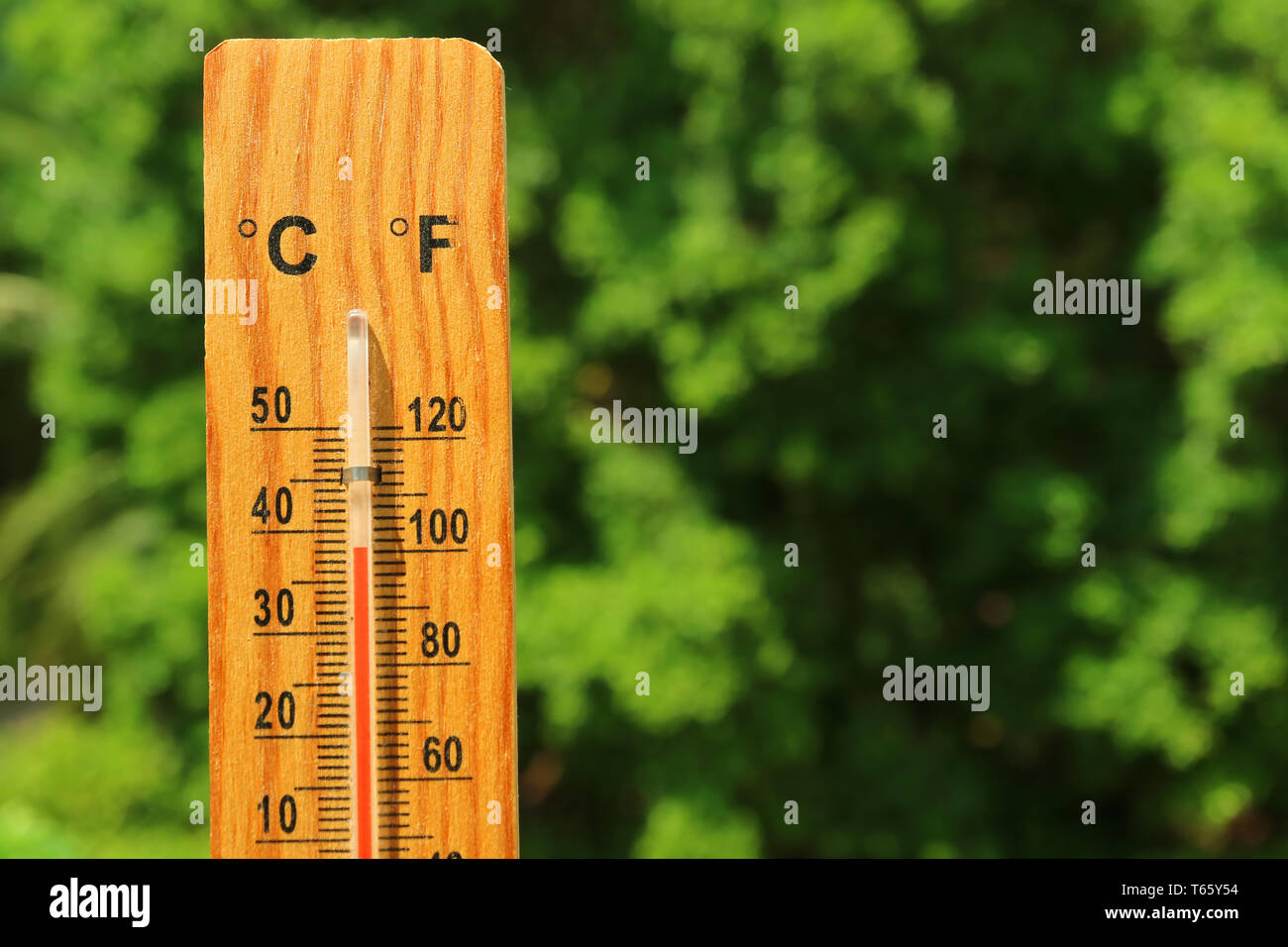 Closeup a wooden thermometer against green foliage showing high temperature - Stock Image
