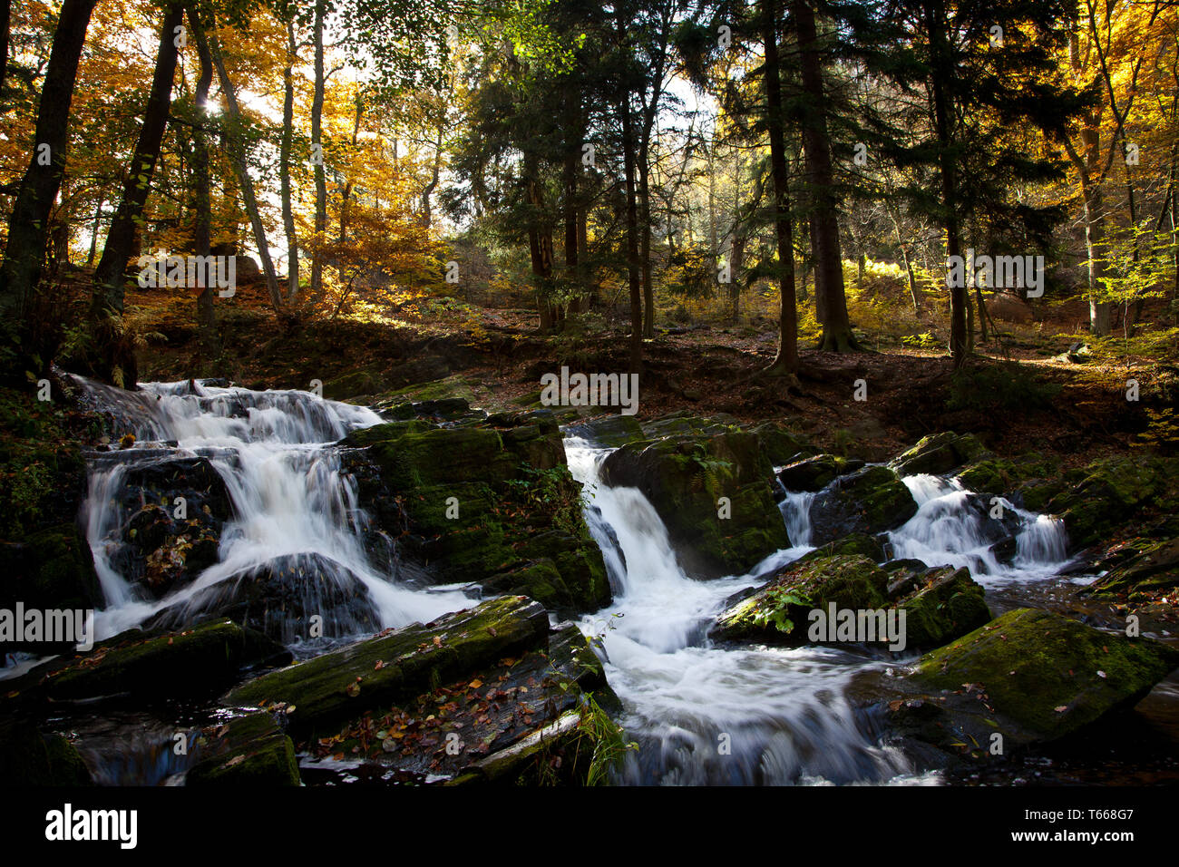 Stream Selke, Harz Mountains, Germany - Stock Image