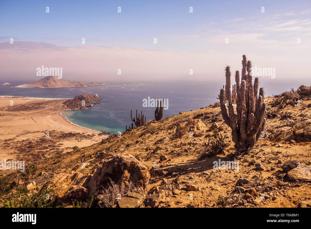 Coast of Pan de Azucar National Park in Chile. Atacama desert coast and cactus. desert landscape - Stock Image