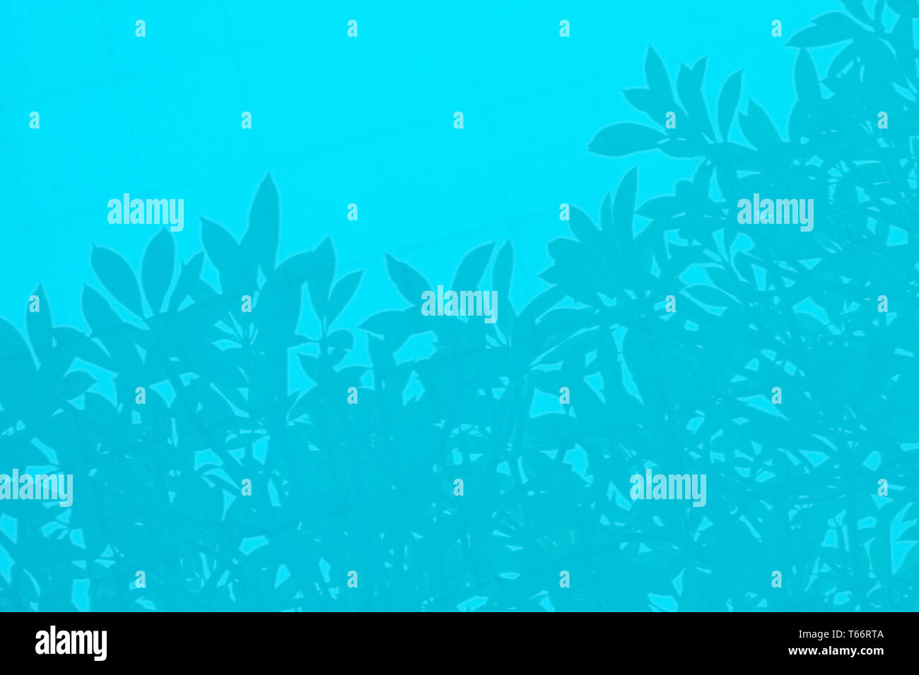 Shadow of leaves and branches is reflected in water pool. Reflection of a tree silhouette. Abstract background of blue color, soft focus.  Copy space. - Stock Image