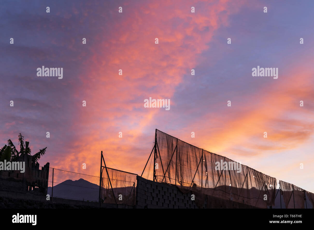 Red sky in the morning, dawn over fencing around a banana plantation with mount Teide in the background, Tenerife, Canary Islands, Spain - Stock Image