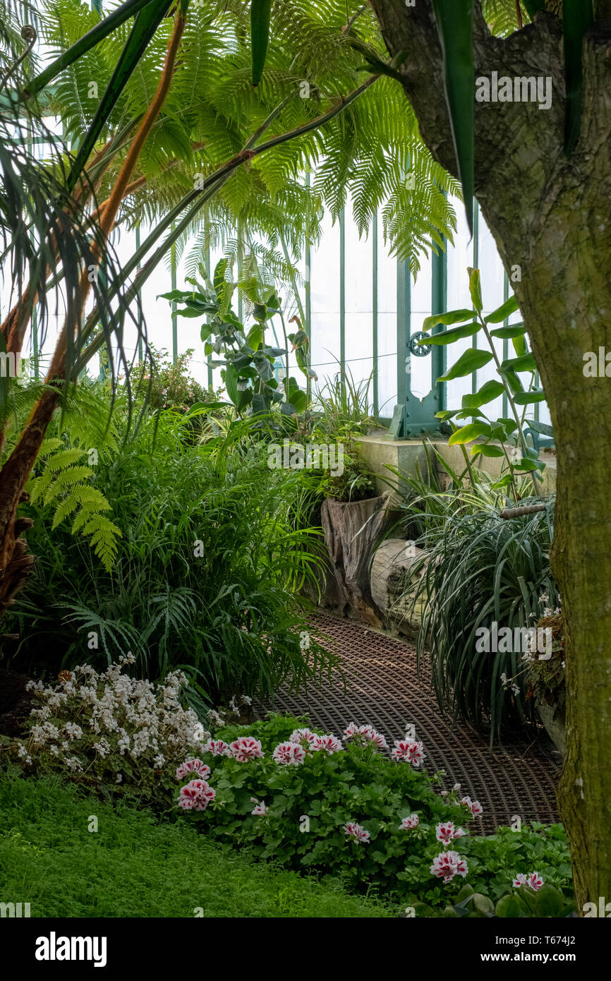 Palm House at the Royal Greenhouses at Laeken, Brussels, Belgium - Stock Image