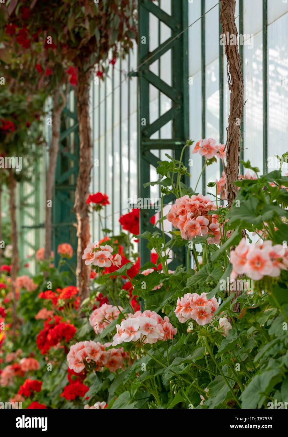The Royal Greenhouses at Laeken, Brussels, Belgium - Stock Image