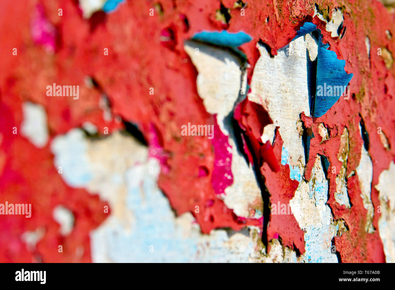 Red paint with a blue undercoat peeling away from a white background. - Stock Image
