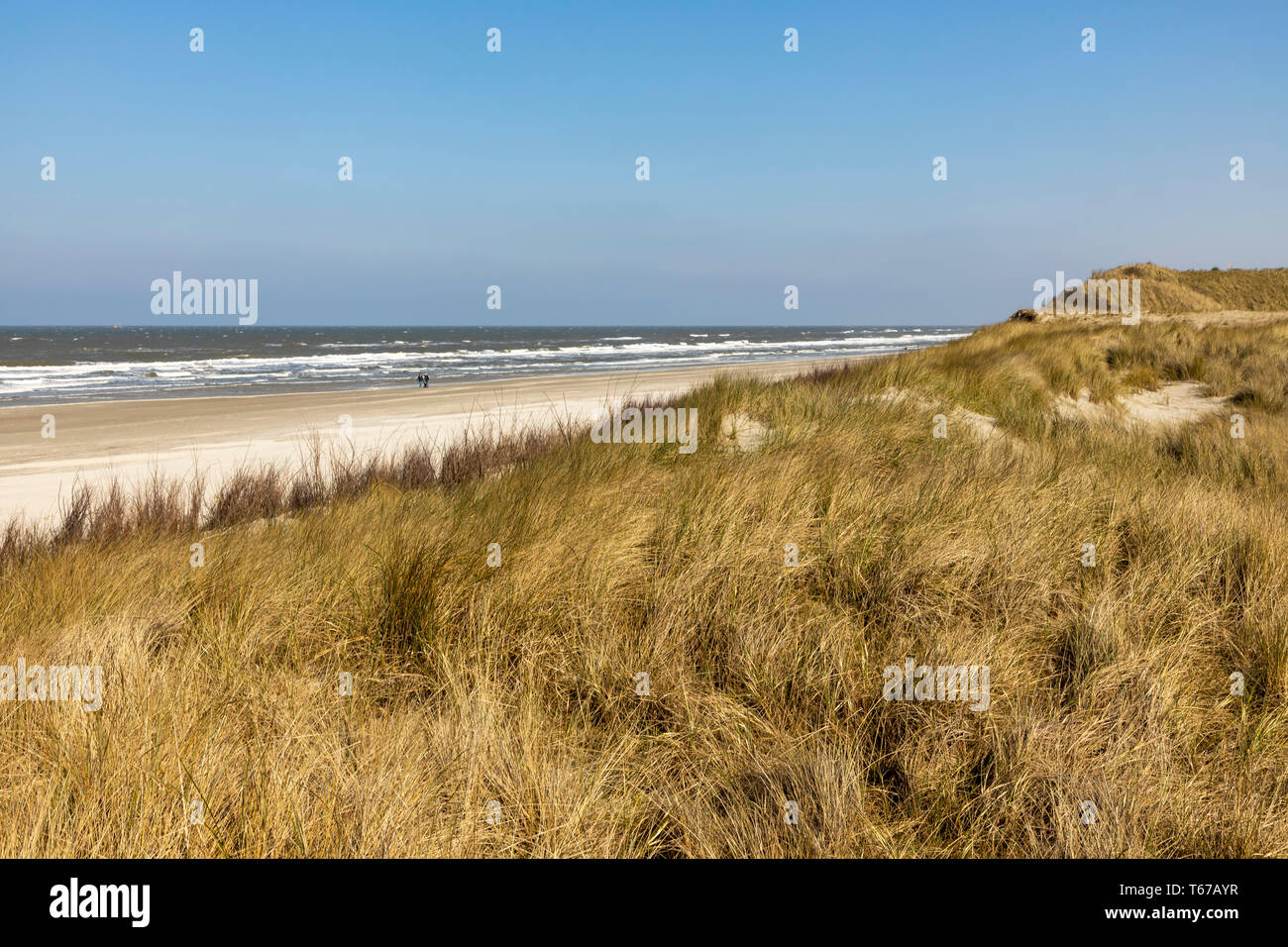 North Sea island Juist, East Frisia, Beach, Dunes landscape, Lower Saxony, Germany, - Stock Image