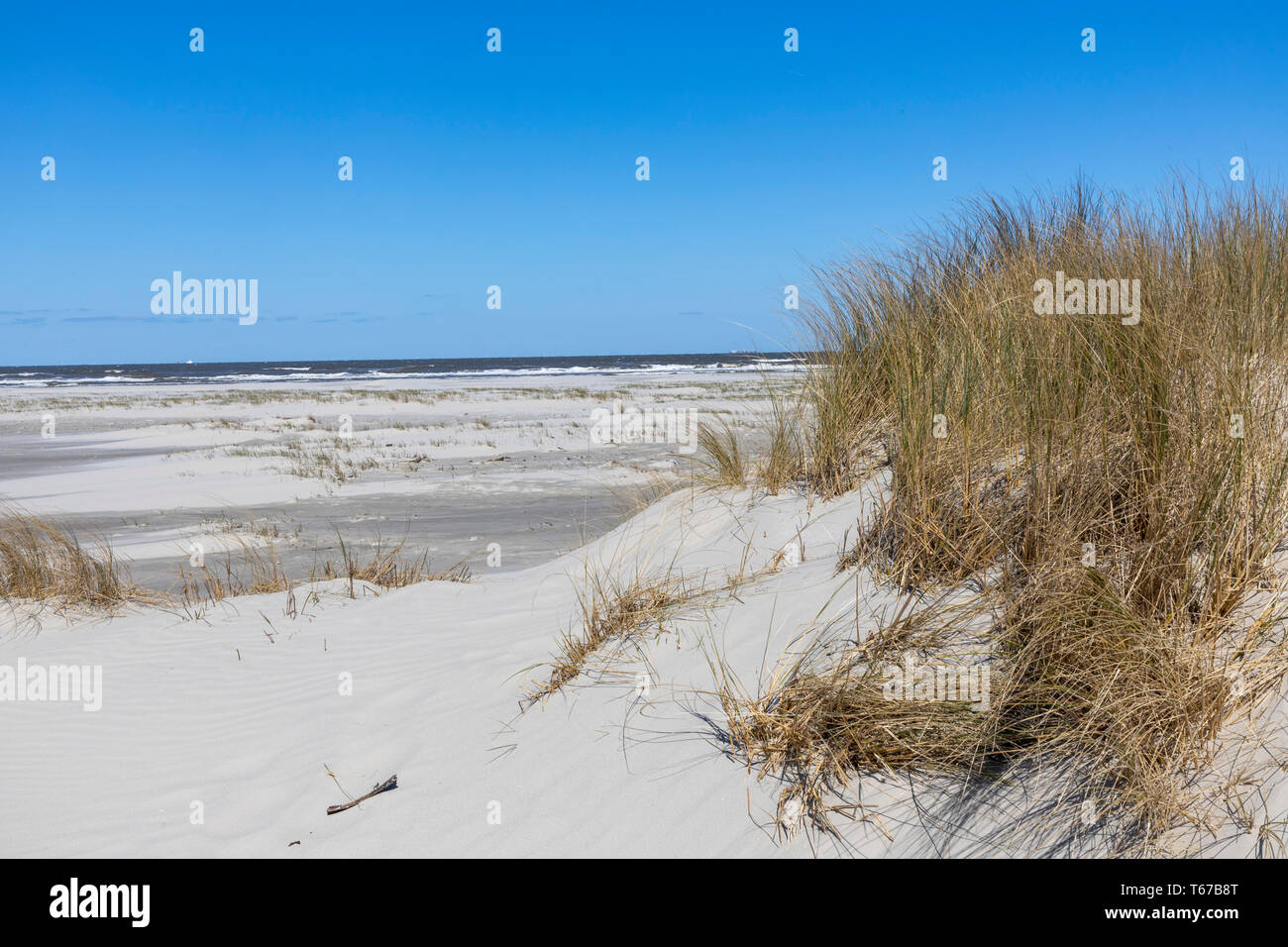 North Sea island of Juist, East Frisia, beach and dune landscape, at the eastern end of the island, Kalfamer nature protection area, Lower Saxony, Ger - Stock Image