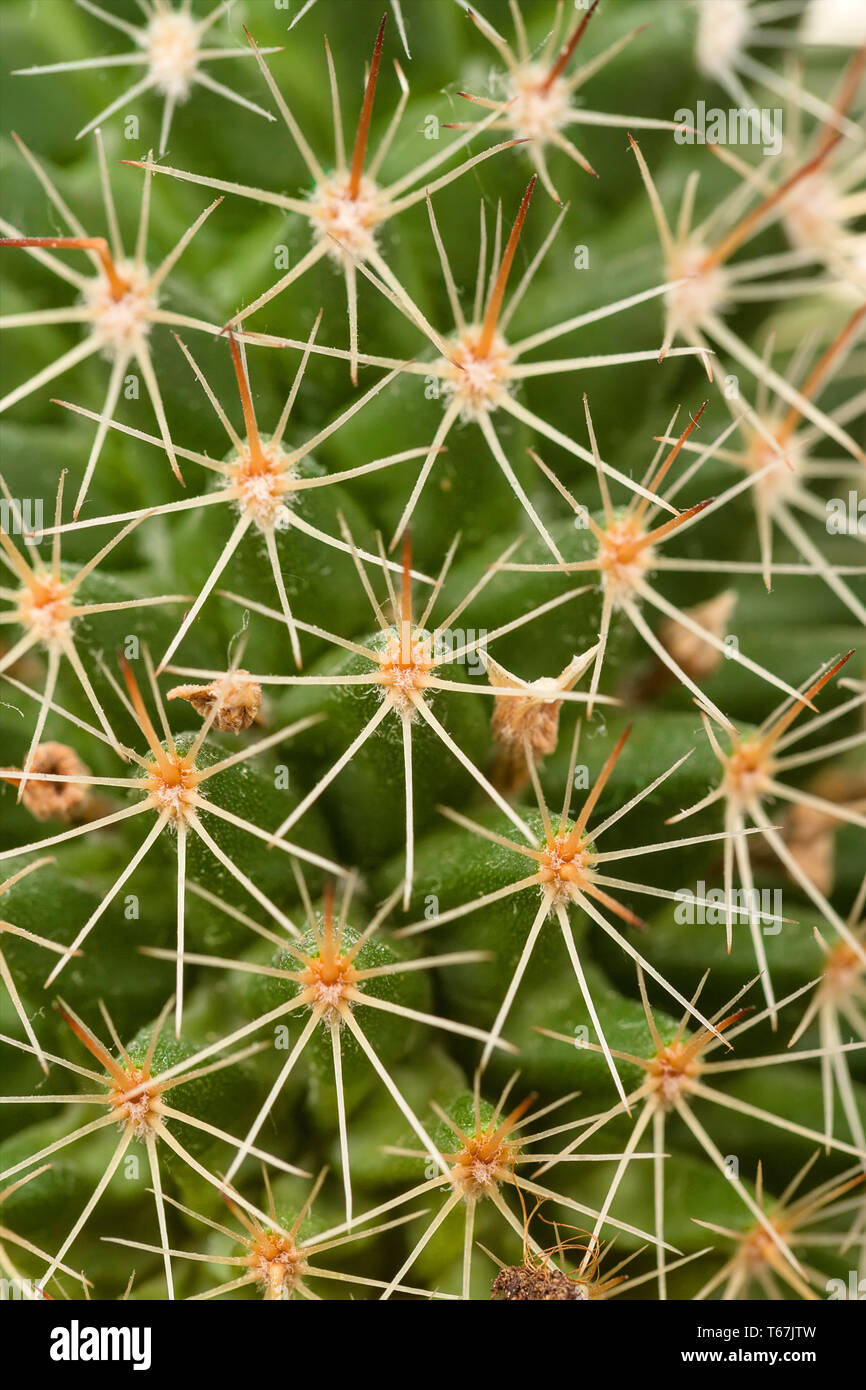 Quills and prickly cactus spines - Stock Image