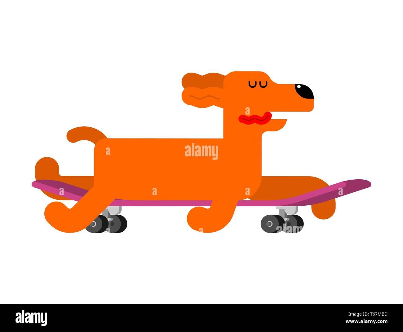 Dog on skateboard. pet on board. hound Skateboarder Stock Vector
