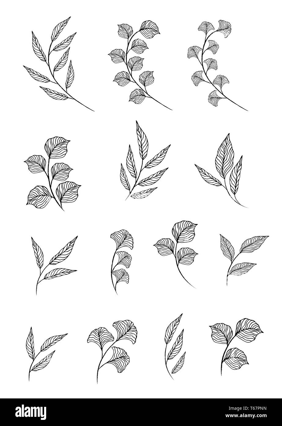 designer elements set collection of greeng leaves herbs in watercolor style. Decorative beauty elegant illustration for design - Stock Image