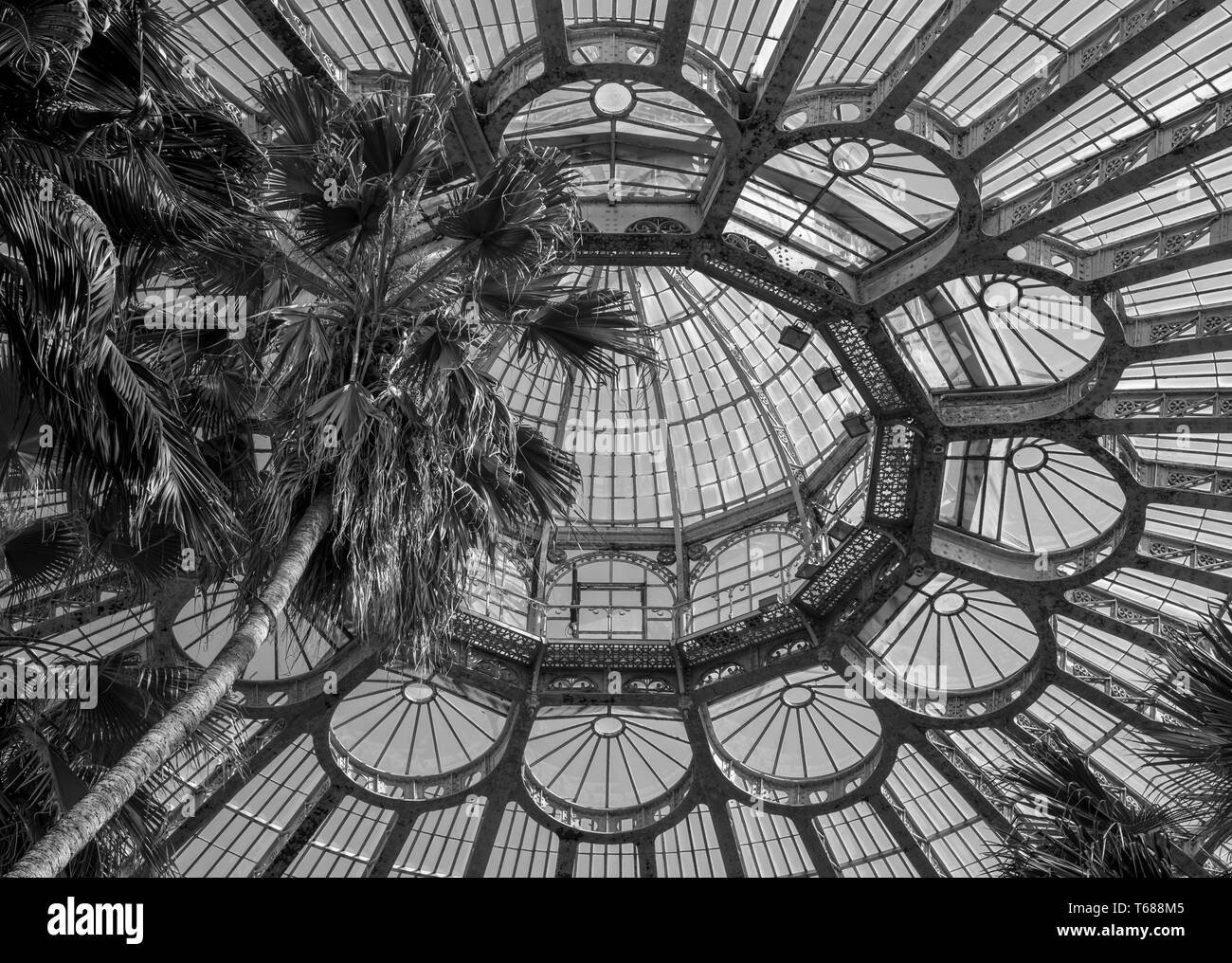 Domed roof of the Winter Garden, at the Royal Greenhouses at Laeken. The Winter Garden houses palms, ferns and exotic tropical plants Stock Photo
