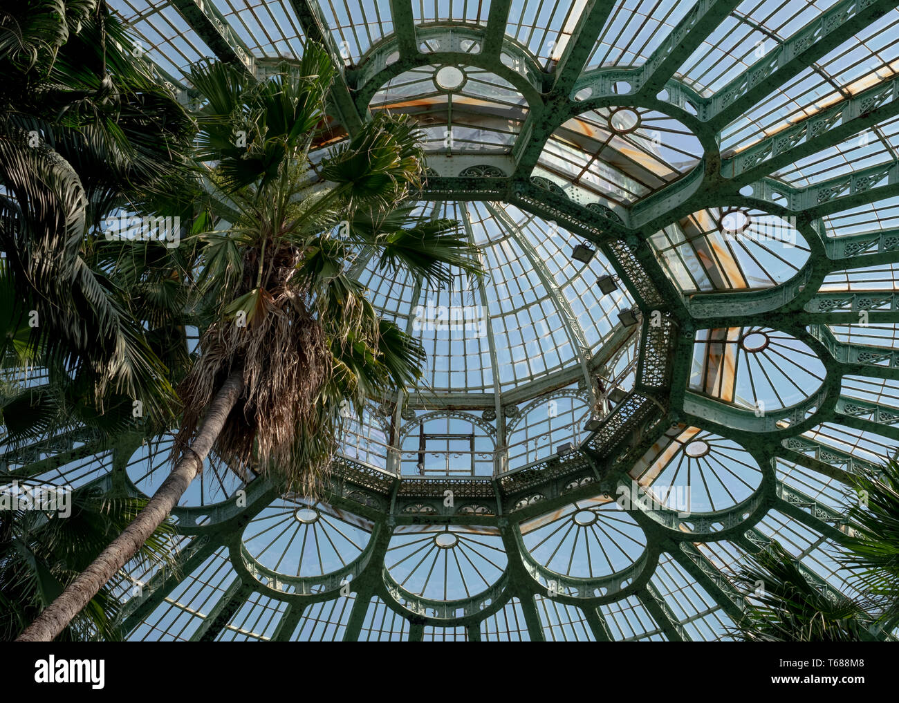 Domed roof of the Winter Garden, at the Royal Greenhouses at Laeken. The Winter Garden houses palms, ferns and exotic tropical plants - Stock Image