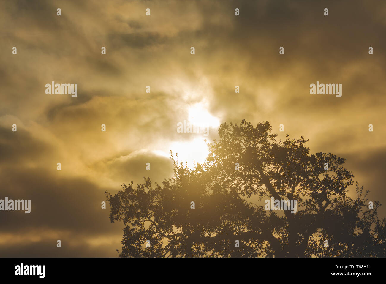 The sun behind the clouds and the crown of the cork tree in silhouette in odemira, Portugal - Stock Image