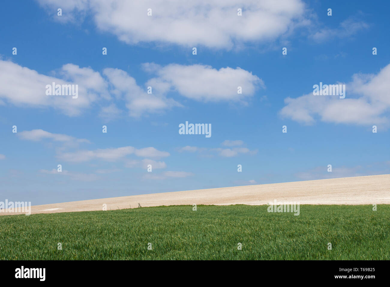 chalky fields and crops on South Downs near St. Roche's Hill, the Trundle, Chichester, Sussex, UK, April. South Downs National Park. Stock Photo