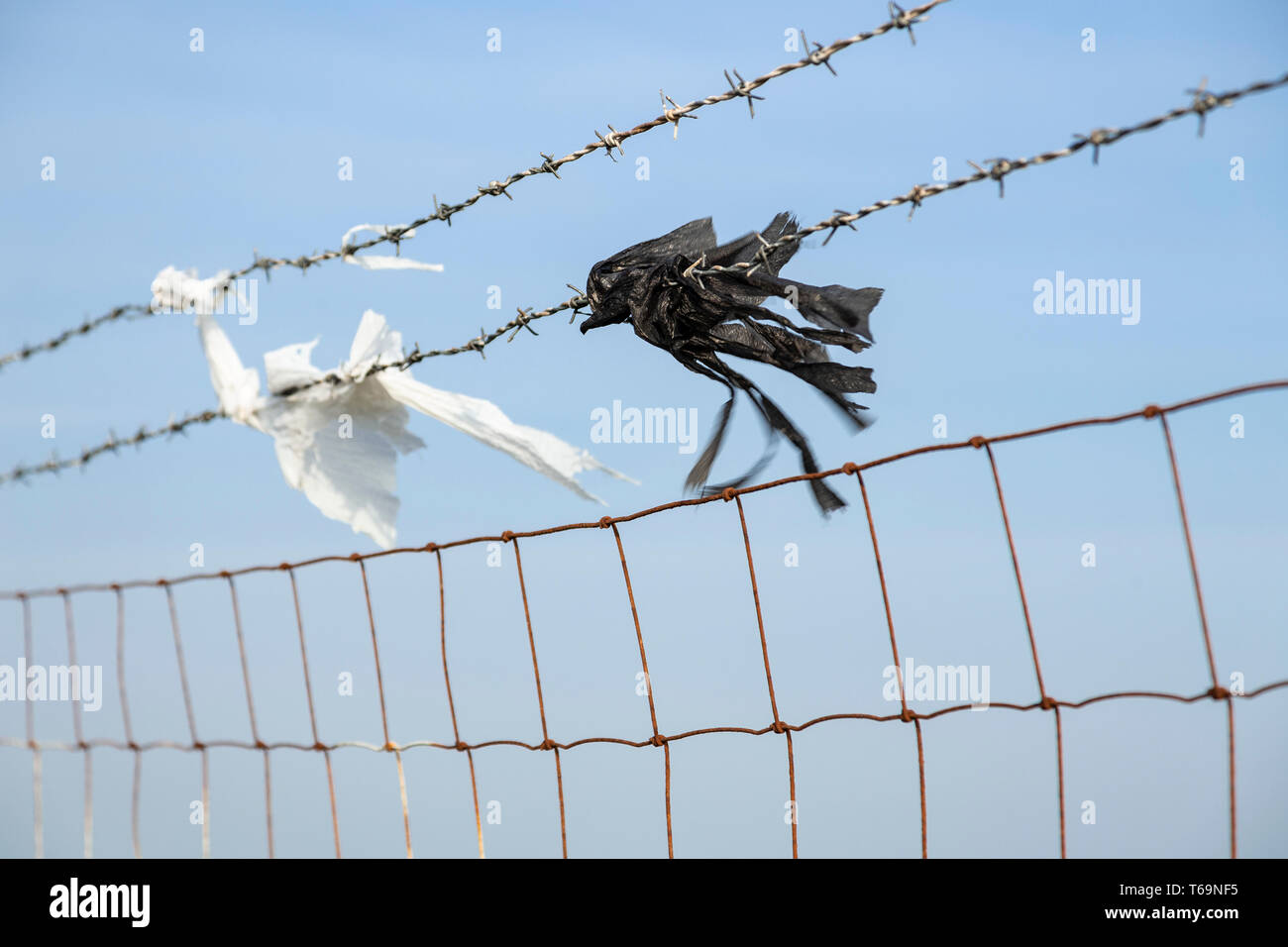 Torn plastic bags caught on a barbed wire fence blowing in the wind - Stock Image
