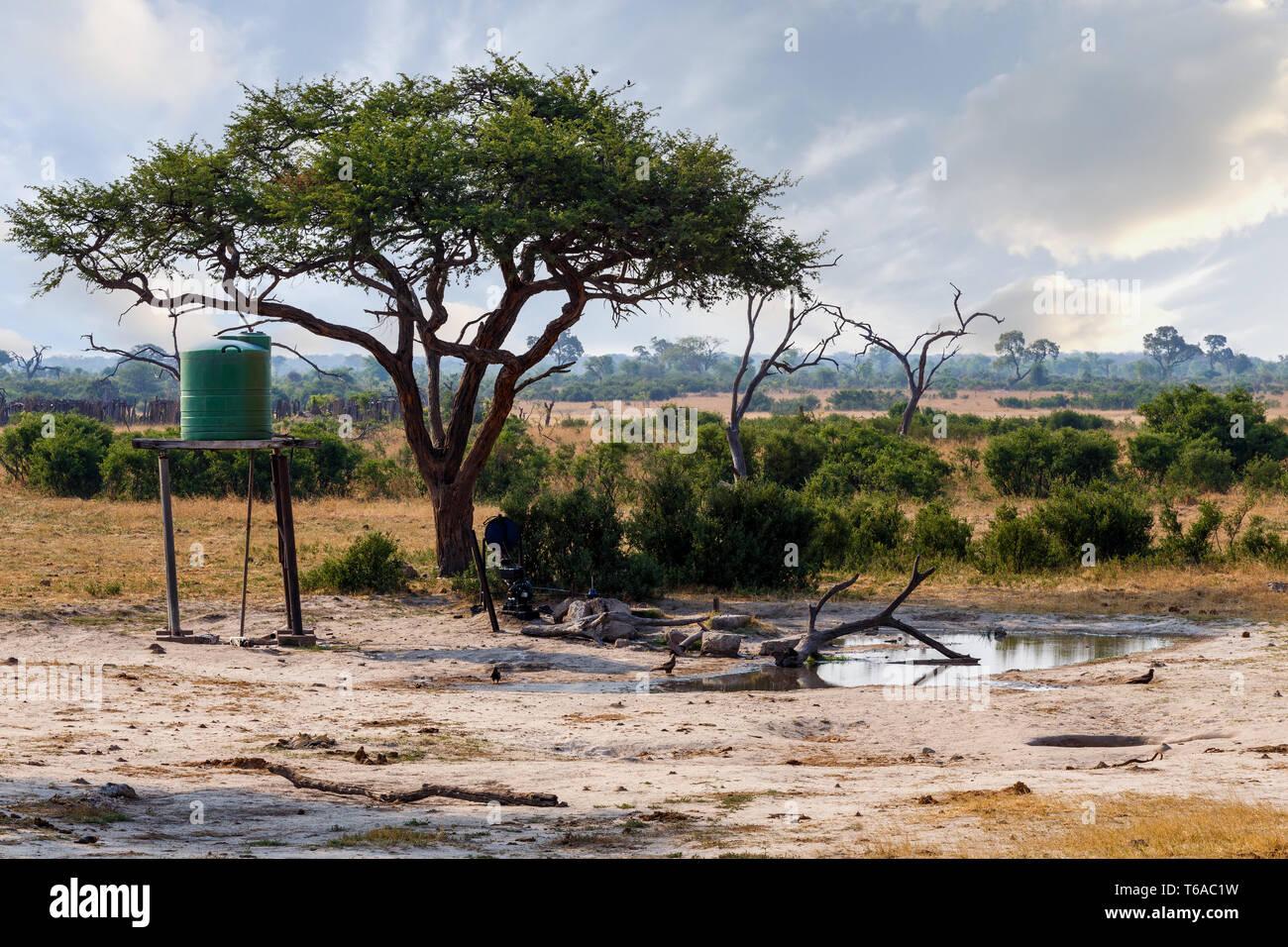 Large Acacia tree in artificial waterhole Stock Photo