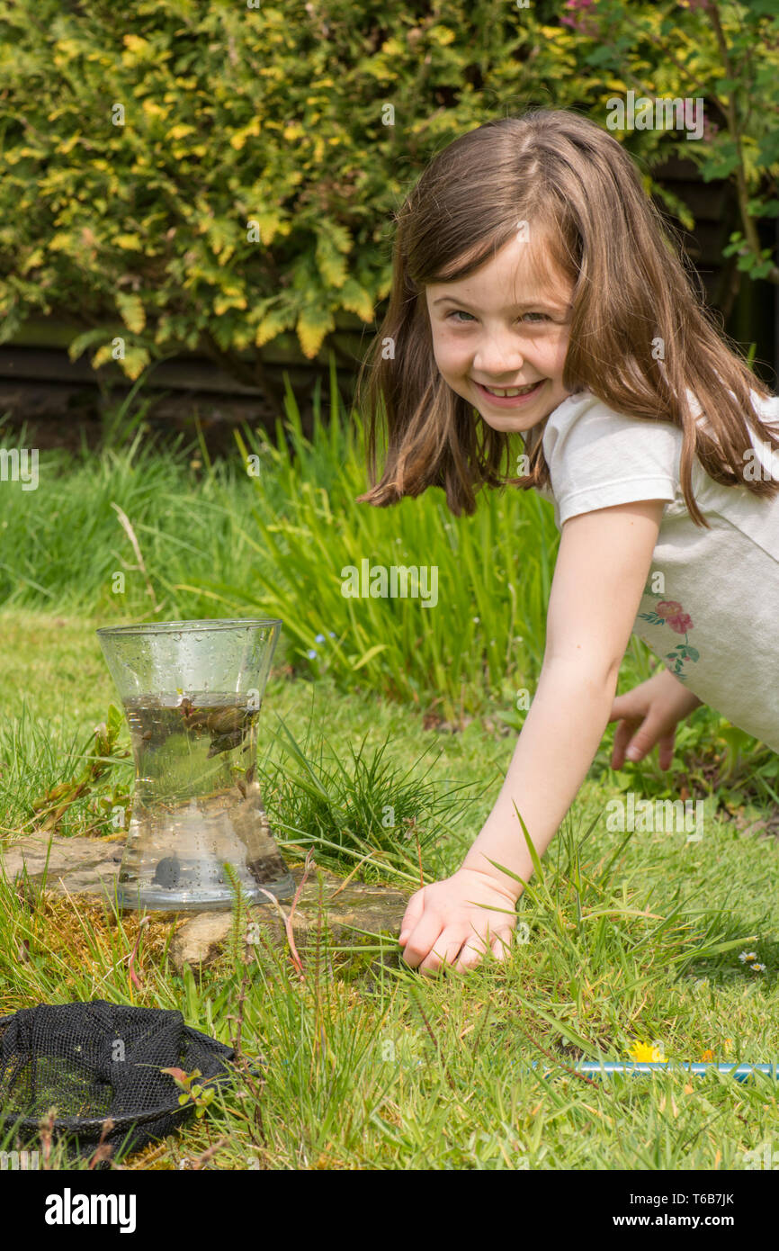 yong girl, eight years old, pond dipping, catching pond life, tadpoles, dragonfly larvae, in net, and putting them in jar, garden wildlife pond, Stock Photo