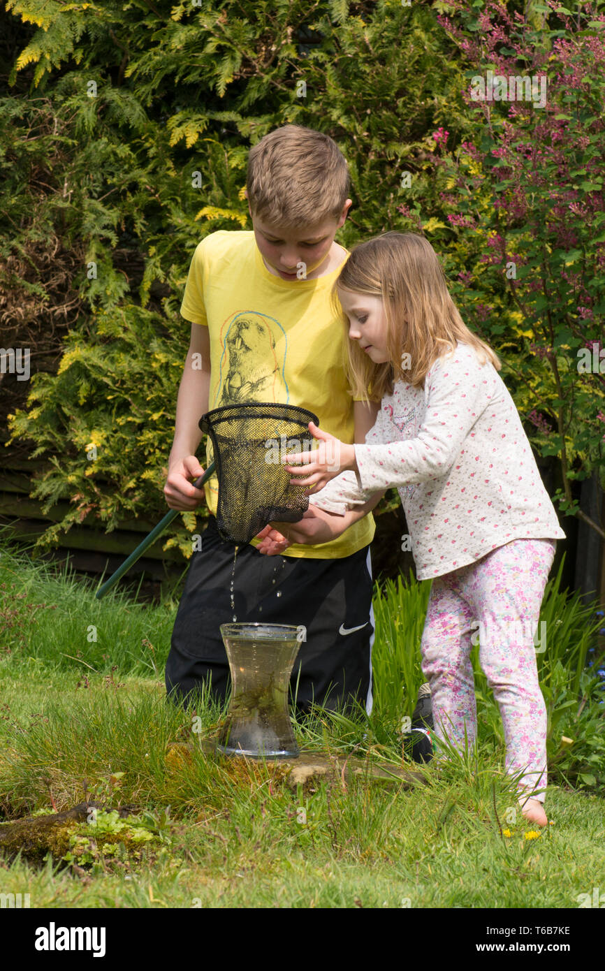 young children, brother and sister, pond dipping together, with net, garden wildlife pond, older brother, younger sister, playing together. nature, Stock Photo