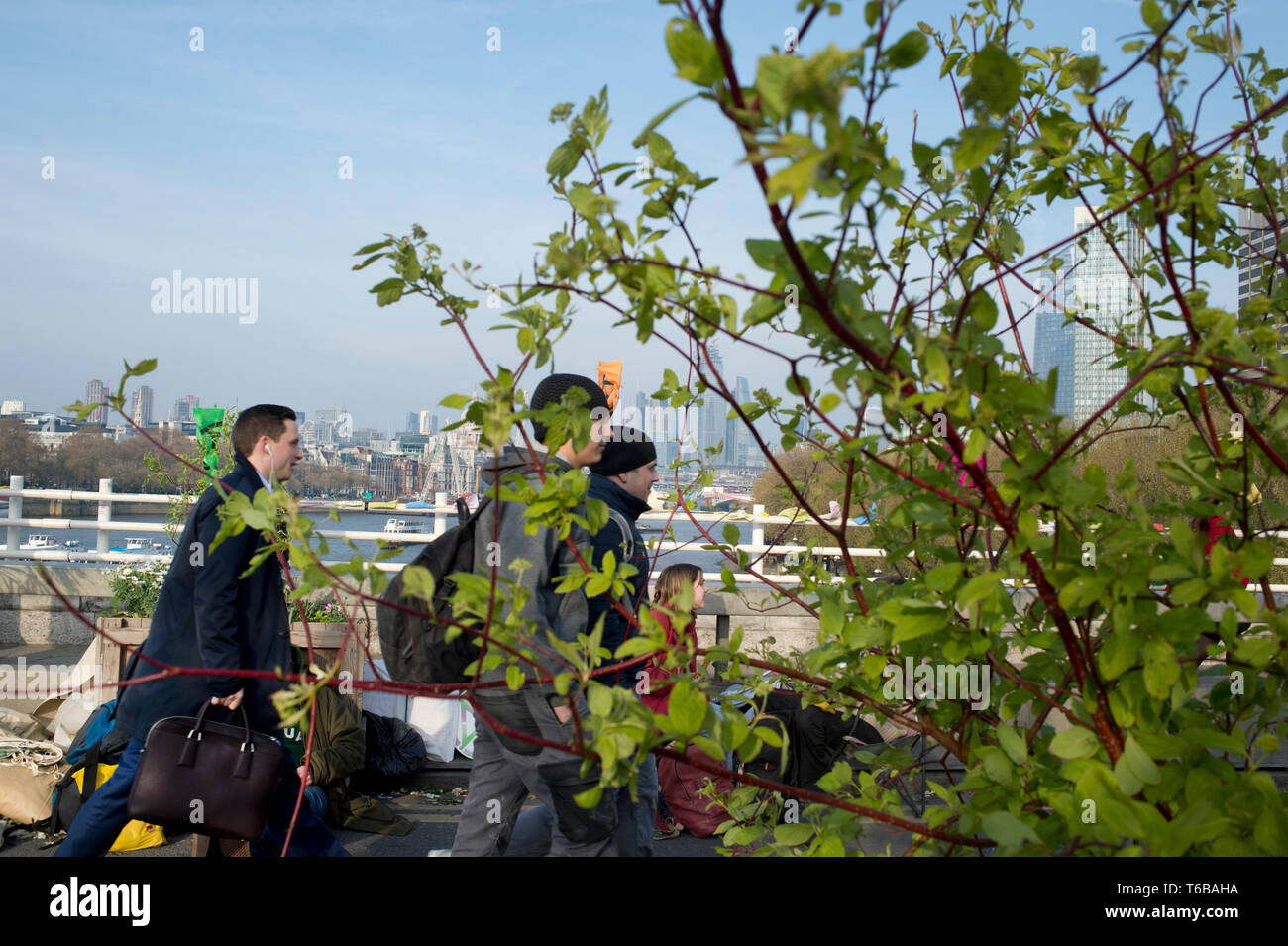 Extinction Rebellion protest, London . Waterloo Bridge. Commuters walk over the bridge closed to traffic by the XR protest and which now has a garden  - Stock Image