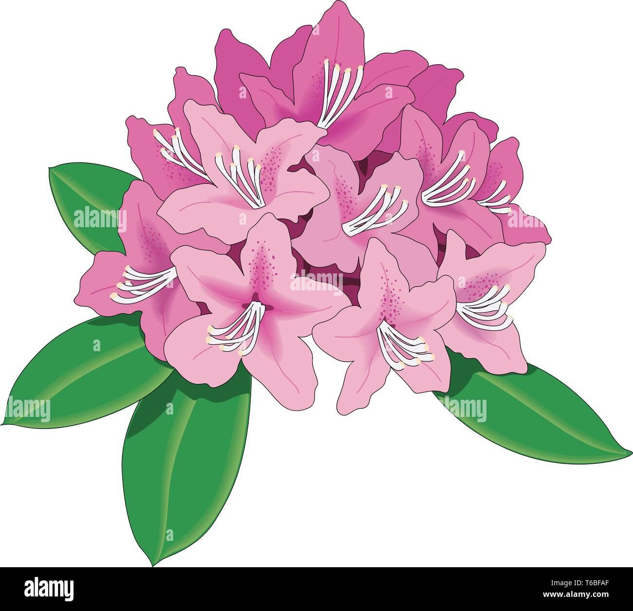 Rhododendron Vector Illustration - Stock Vector