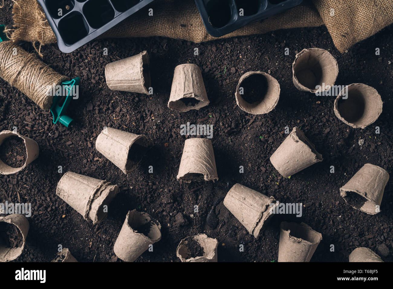 Biodegradable peat pot on greenhouse compost humus soil, organic farming and cultivation - Stock Image