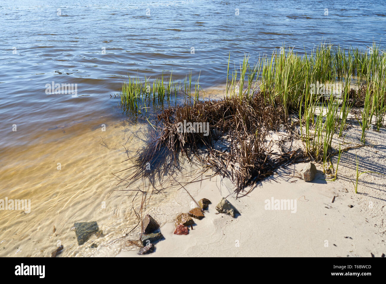 On the banks of the river Elbe near Magdeburg - Stock Image