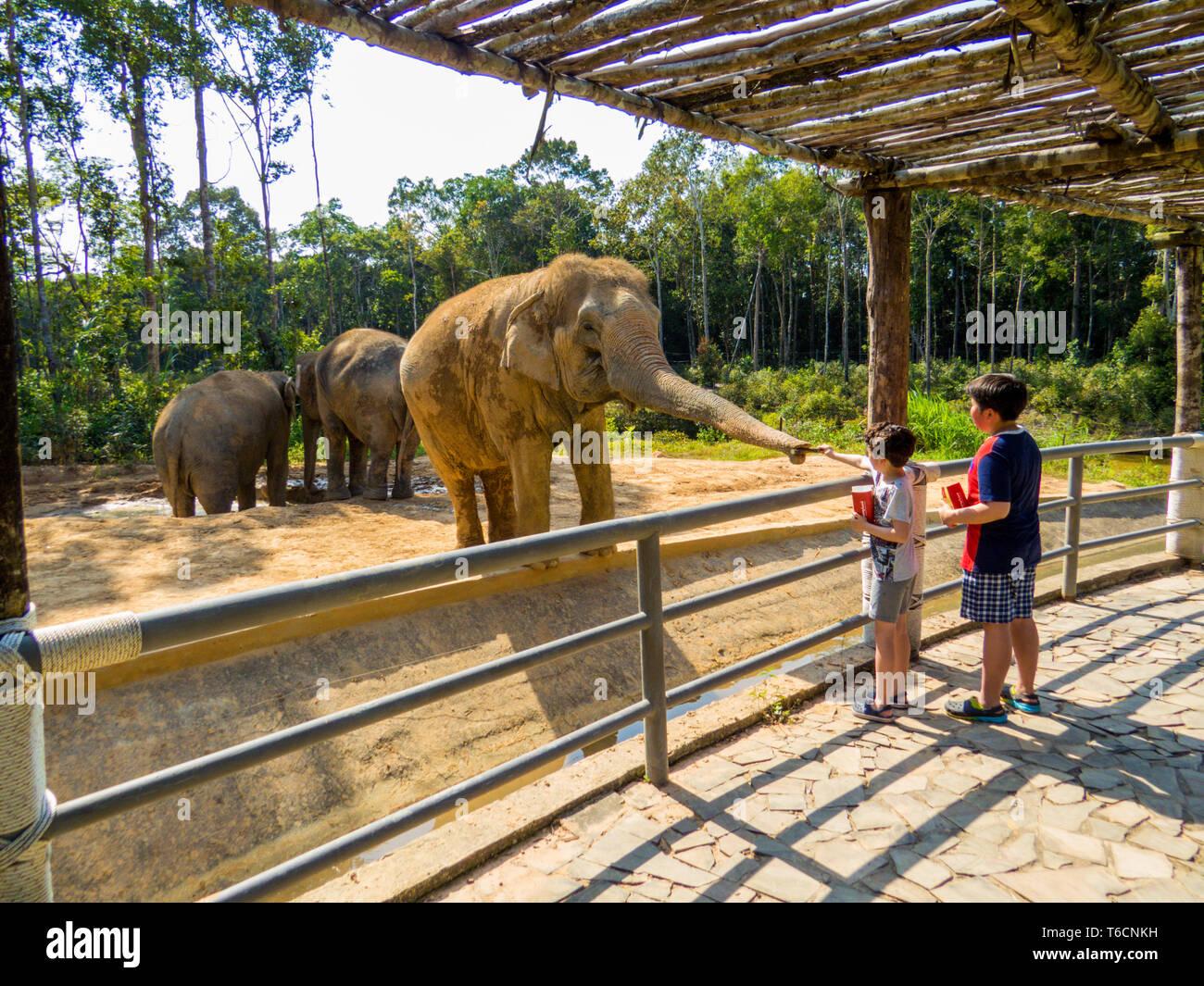 PHU QUOC, VIETNAM - FEBRUARY 12, 2018: Kids feeding Asian elephant in the Vinpearl Safari zoo park. - Stock Image