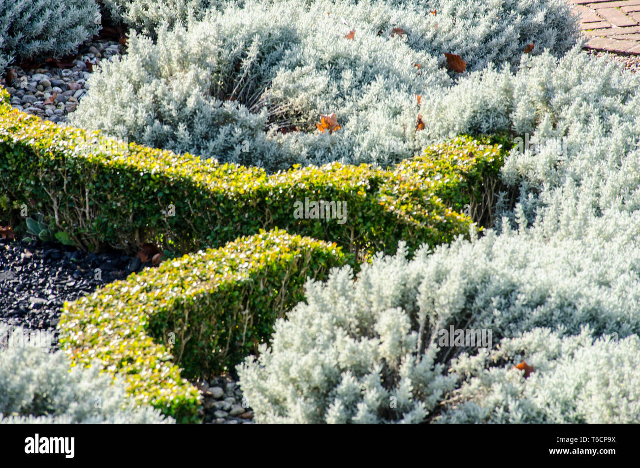 Looking down at hedging - Stock Image