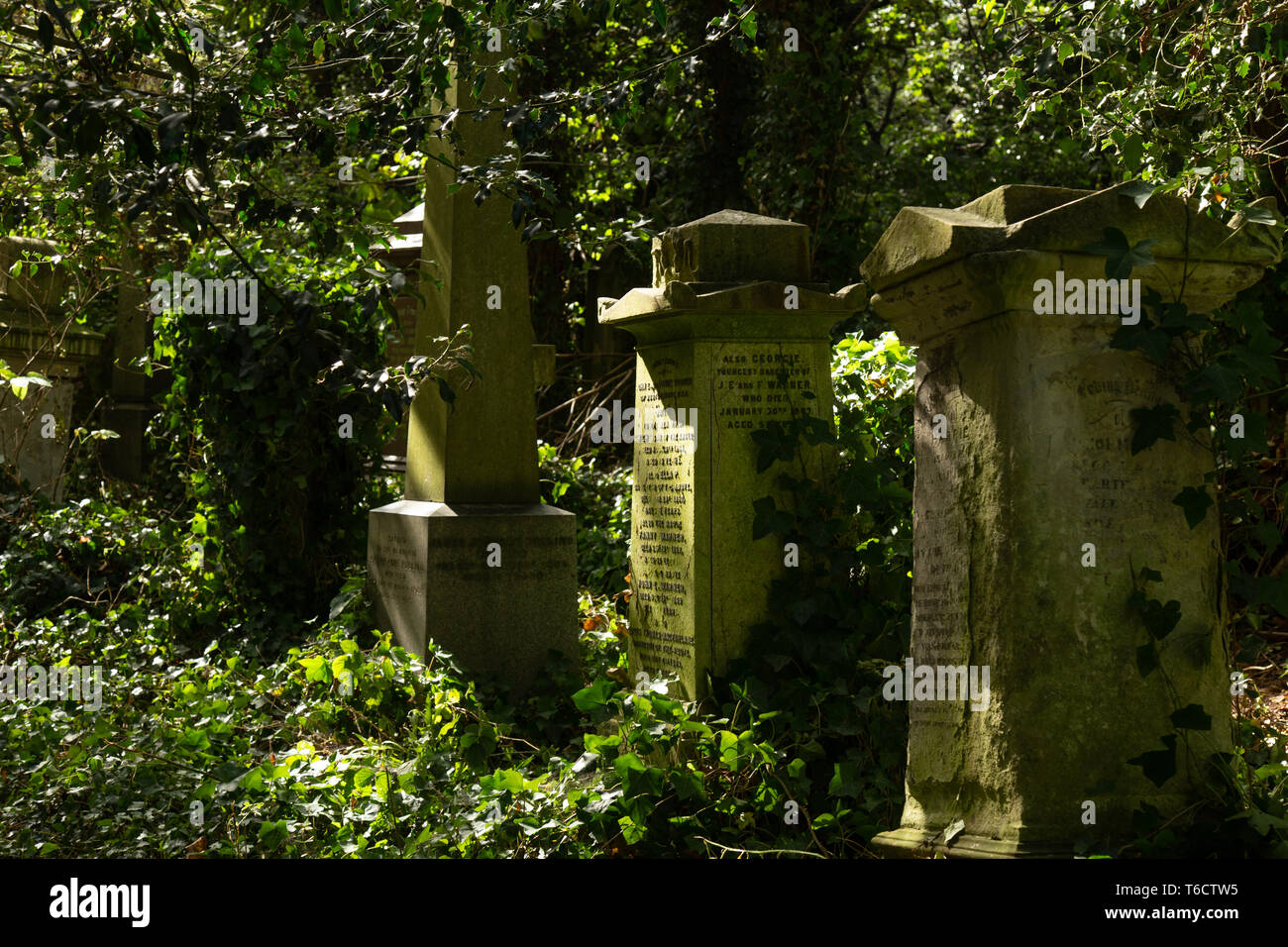 Old graves on the cemetery, in Abney Park, London, UK - Stock Image