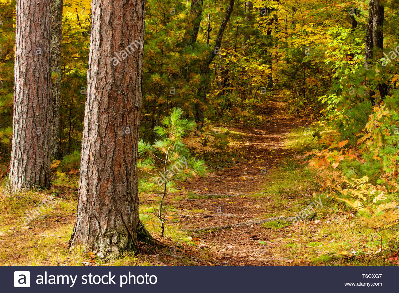 Autumn Colors In Vilas Park Lagoon >> A Nature Trail Through The Woods At Firefly Lake State Park Near